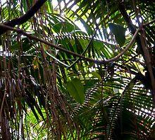 Rain Forestation by John Cruz