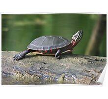 Downward Dog, Turtle Style Poster