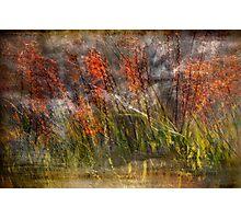 Misty Swamp Photographic Print