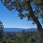 North Fork CA- view from Bob&#x27;s place by David Chesluk