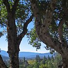 Oaks and hills- Bob&#x27;s place- North Fork CA by David Chesluk