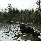 Wetland In Winter - Idlewild, MI by Stephen D. Miller