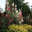 My Backyard Garden by kkphoto1