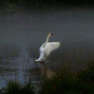 Swan Song II by Barbara Gerstner
