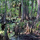 Cypress Swamp by Judy Wanamaker