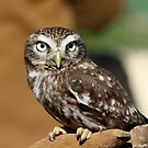 The Little Owl by Hovis