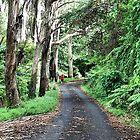 Mt Wilson Laneway by Phil Woodman