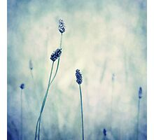 endearing  Photographic Print