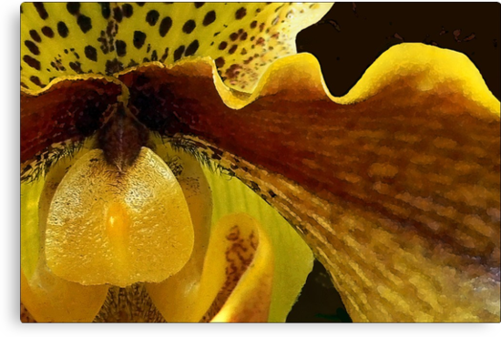 Orchid in Yellow Ochre by paintingsheep