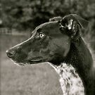 Greyhound x by Lou Wilson