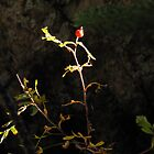 Rosehip in the sunlight by Christine Ford