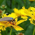 Moth by Pierre Frigon