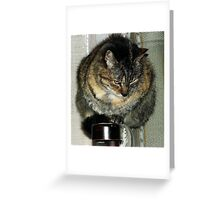 Zoe. Greeting Card