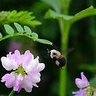 Buzz Buzz by Wheelssky