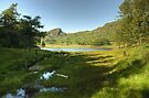 Blea Tarn On An Afternoon In July by Jamie  Green
