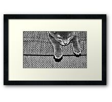 Kitten VII Framed Print