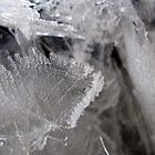 Ice Leaves by Josh Bush