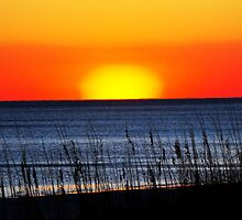 End of the Day by Cynthia Broomfield