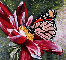 Butterfly on a Pink Flower by Rachelle Dyer