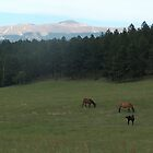 Pikes Peak horses by Christine Ford