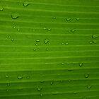 Green by ekmarinelli
