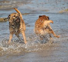 For Goodness Sake...............control yersell!! Border Terriers. by Dorothy Thomson