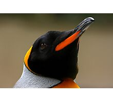 King Penguin Portrait Photographic Print