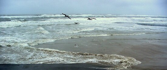 Seagulls and Sea Storm by ienemien