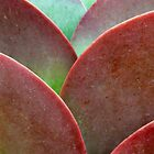 Succulent curves by ChristinaR