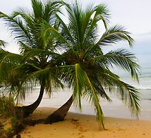 Palm Pair, La Cabana, Panama by tableau