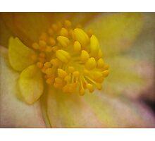 Begonia core Photographic Print