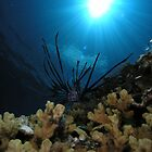 Lion Fish in the deep by Gerard Rotse