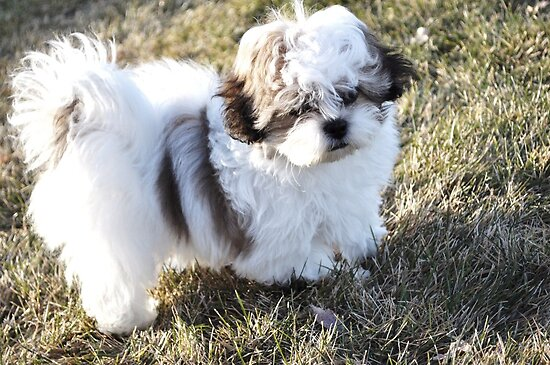 Puppy in Icy December by TiffanieH