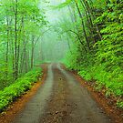 BALSAM MTN. ROAD,FOG by Chuck Wickham