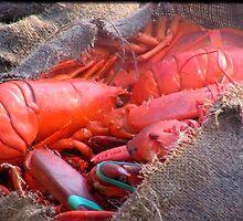 50 Lobsters in a Burlap Bag by Debbie Robbins