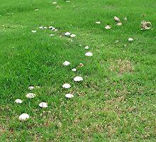 Mushrooms in the Grass by DelitefulDee