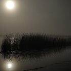 Christchurch - Reeds in the Mist  by delros