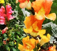 Colorful Snapdragons by Susan Savad