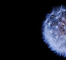 Dandelion 11 by Sabine Jacobs