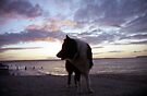 Sunset by the sea with Indy by Michael Haslam