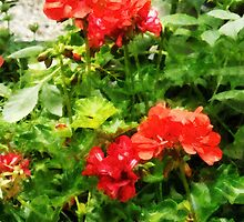 Bright Red Geraniums by Susan Savad