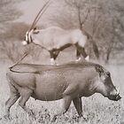 Kalahari Neighbors by Donald  Mavor