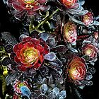 Succulant Black Roses by Carla Wick/Jandelle Petters