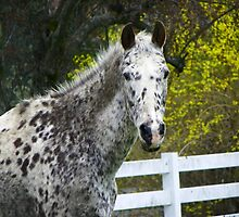 Handsome Horse by MaryinMaine