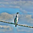 Down at the Docklands Shags sway drunkenly. by Lynne Haselden