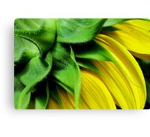 Make-A-Wish Sunflower Canvas Print