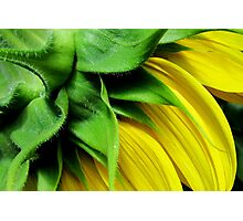 Make-A-Wish Sunflower Photographic Print