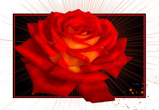 Rose C4 by zitavaf