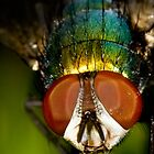 Green Bottle Fly - Australian Gardens by Barry Armstead