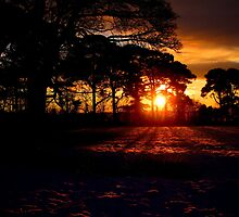 Black Winter Sunrise by mairead62